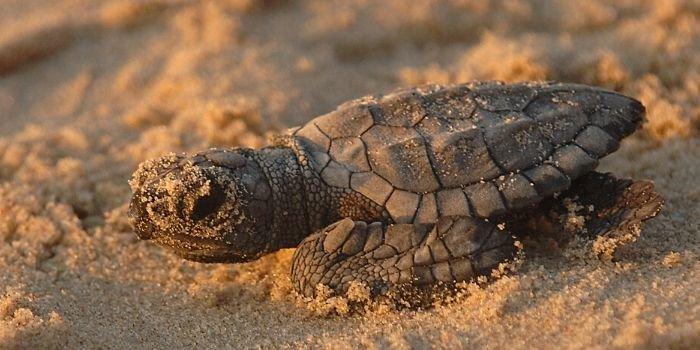 Czy fotowoltaika wpłynie pozytywnie na wzrost populacji żółwi?