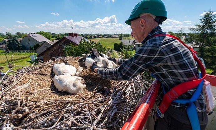 Energetycy i ekolodzy dla bocianów