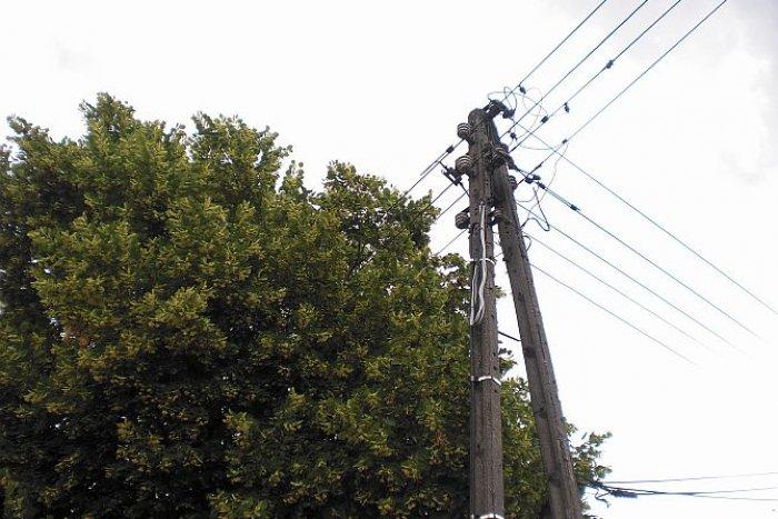 """Władze miasta """"boją się"""" zrobić wycinkę, dopiero jak kogoś porazi prąd, to prawnicy będą mieli zajęcie"""
